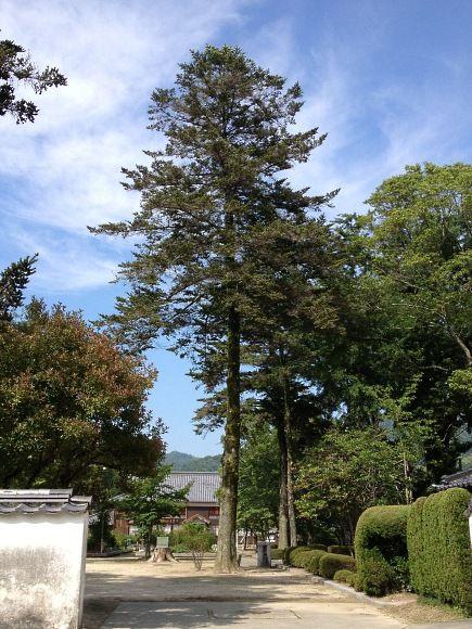 吉香公園・樹木