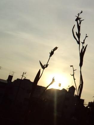 川原の草20110207