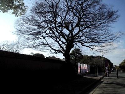 01-花庭園前