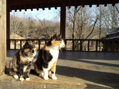20101220民族村の猫