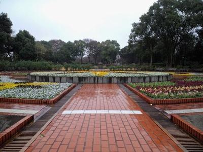 20110103雨の大花壇