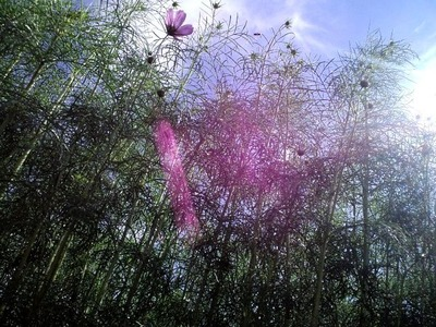 20101011密林