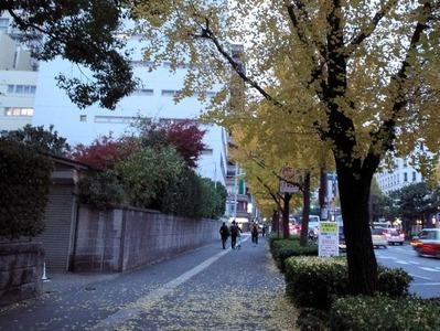 イチョウ20101130