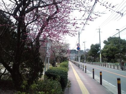 20110220平尾山荘通り