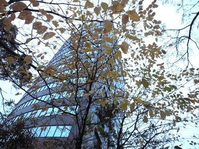 桜その120101130