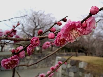 花のなる枝