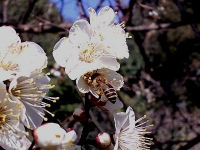 雪月花・ハチ2