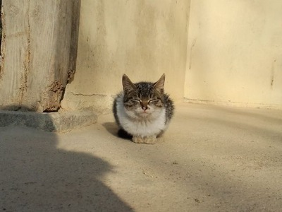 20101220民族村の赤ちゃん猫