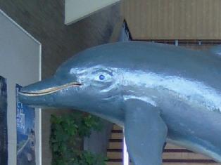 イルカの目
