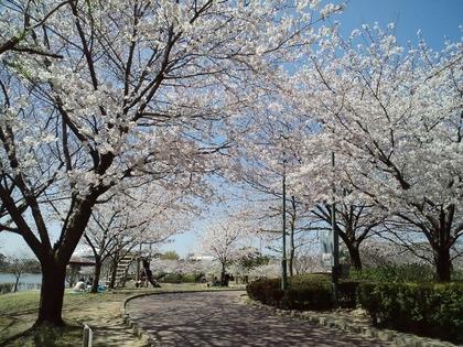 110405桜並木